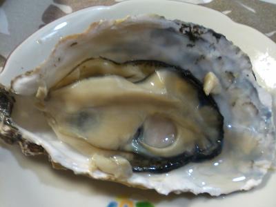 久美浜牡蠣2.jpg